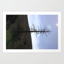 Mount Etna Tree Art Print