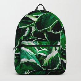 Hosta undulata albomarginata vibrant green plant leaves Backpack