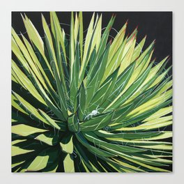 Yucca with spider Canvas Print