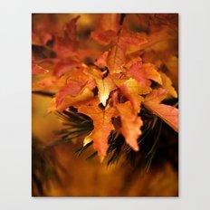 Burnt Orange Leaves Canvas Print