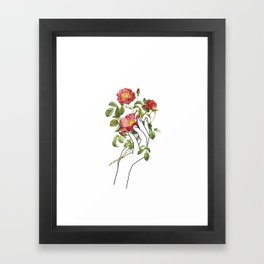 Flower in the Hand II Framed Art Print