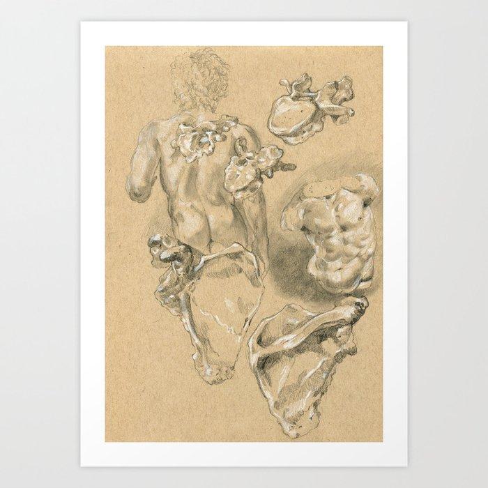 Anatomy 02. Vertebrae and Scapula Art Print