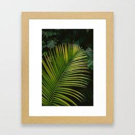 Tropical Hawaii II Framed Art Print