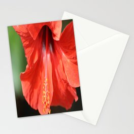 Red Petal and Anther with Pistil of Hibiscus Flower Stationery Cards