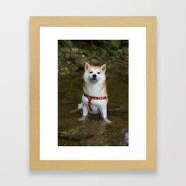 KUMA: Shiba In River 1 Framed Art Print