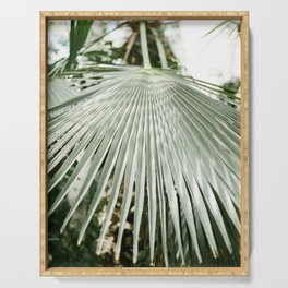 Botanical garden close up | Palm leaf detail | Fine art photography print Serving Tray