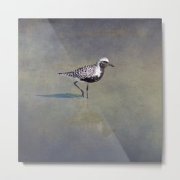 Black-Bellied Plover Metal Print