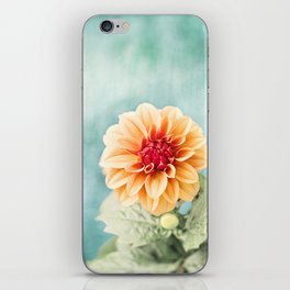 Aqua Orange Dahlia Flower Photography, Turquoise Teal Peach Nature Art iPhone Skin