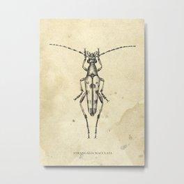 Beetle longhorn Metal Print