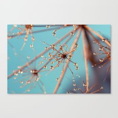 Queen Anne's Lace in Blue Canvas Print