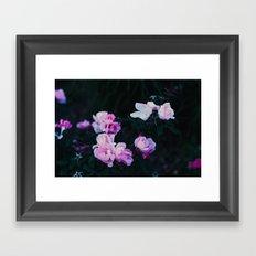 pastel roses Framed Art Print