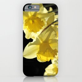 Backlit Yellow King Alfred Daffodils iPhone Case
