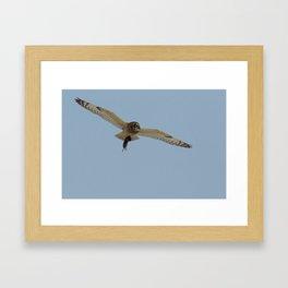 Asio flammeus - Short Eared Owl Framed Art Print