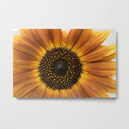 Sunflower-160818-287 Metal Print