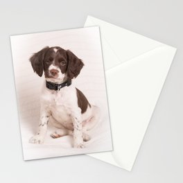 Brittany Puppy Sitting Stationery Cards