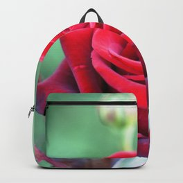 Roses on the city flowerbed. Backpack