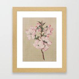Ariaki - Daybreak Cherry Blossoms Framed Art Print