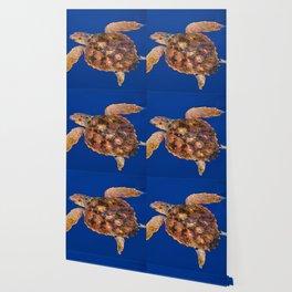 Loggerhead sea turtle Wallpaper