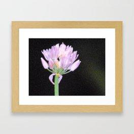 Chives Single Flower Framed Art Print