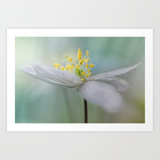 Gorgeous Wood Anemone... Art Print