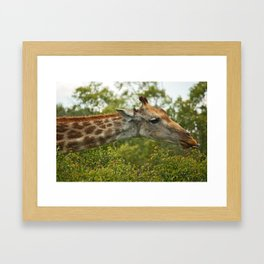 southafrica ... let's snack! Framed Art Print