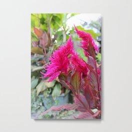 Magenta Celosia Tropical Flower Metal Print