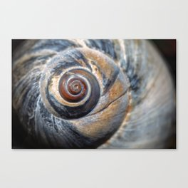 Blue and Gold spiral seashell Canvas Print