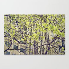Maze Of Branches Canvas Print
