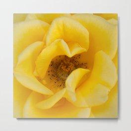 Rose Garden Three Metal Print