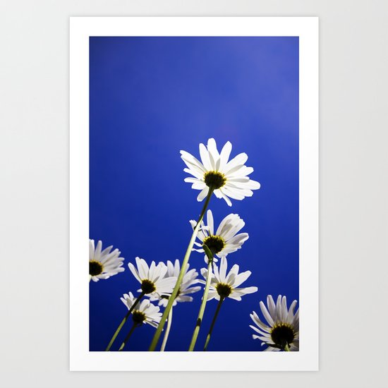 Daisies of the universe Art Print
