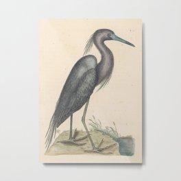 Blue Heron Vintage Bird Print by Mark Catesby, 18th Century Metal Print