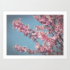 Cheery Cherry Blossoms {2} Art Print