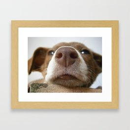 Snout1 Framed Art Print