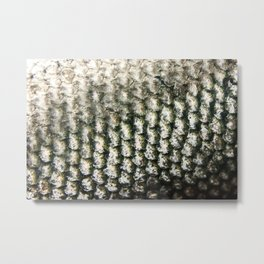 Sockeye Scale Photography Print Metal Print
