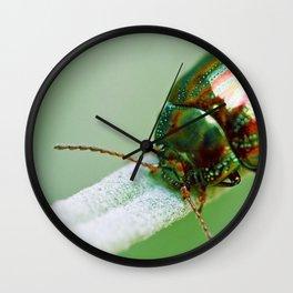 Scarabaeus Macro Close Up Wall Clock