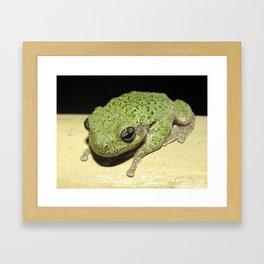 Tree Frog 1 Framed Art Print