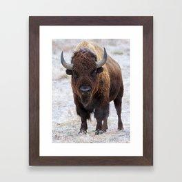 In The Presence Of Bison 2  Framed Art Print