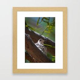 Hummingbird Momma Framed Art Print