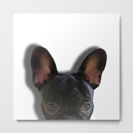 French Bulldog Peekaboo Metal Print