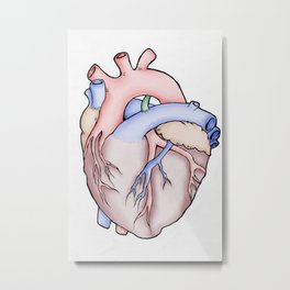Anatomical Heart Metal Print