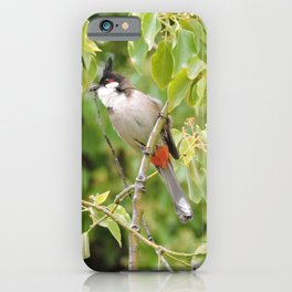 Red-Whiskered Bulbul -- 2 iPhone Case