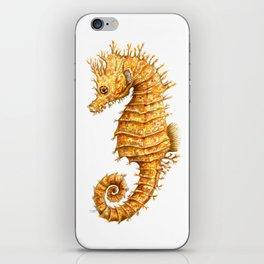 Sea horse, Horse of the seas, Seahorse beauty iPhone Skin
