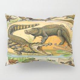 Reptiles Chart Nature Vintage Snake Turtle Alligator Pillow Sham