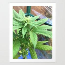 Cannabis and Mantis Art Print