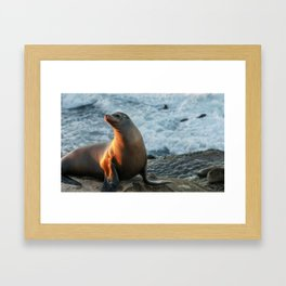 Posing Seal Framed Art Print