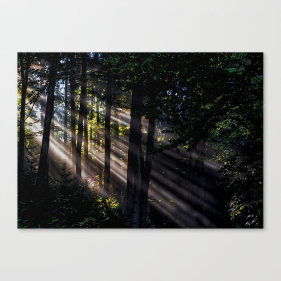 Pathless Woods #spring #forest Canvas Print