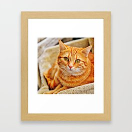 Cute red cat Framed Art Print