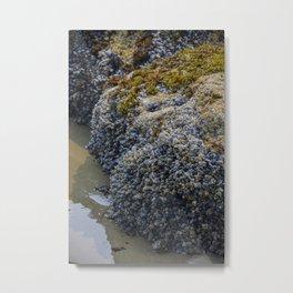 Seashells Ecola state park Metal Print