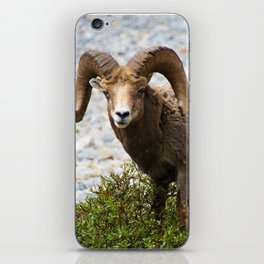 Ram Stare Down iPhone Skin