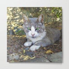 Grey cat with green eyes Metal Print